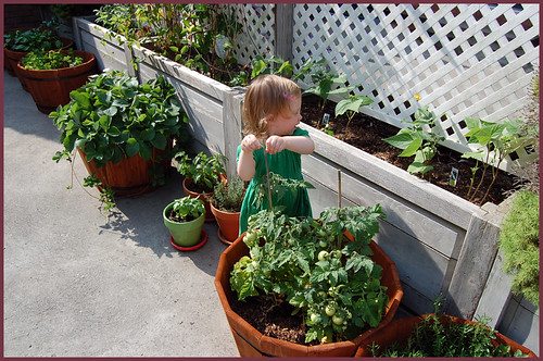 the garden is growing like gangbusters