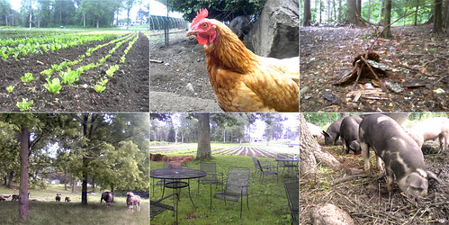 Green Meadows Farm Collage