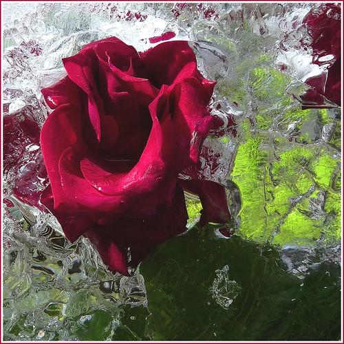 Das Eis muss jetzt weg, ich will jetzt Blumen