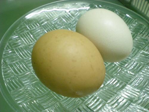 Kampun chicken egg 2