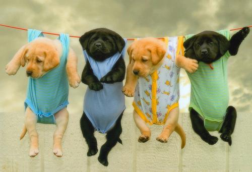 Doggy laundry