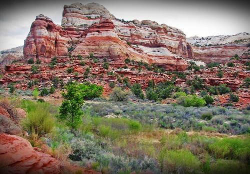 Utah scene