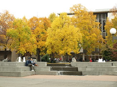 Autumn Leaves at UVic