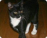 Treena Kitten