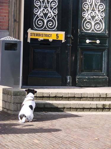 Brave Hond [Day 61/365]