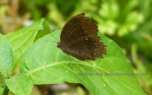 Butterfly Farm in Puerto Princesa 11