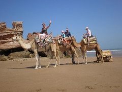 Camel ride on the beach - Morocco
