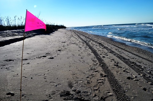 Beach Mile Marker 324 - Stump Pass Beach State Park, Fla., Nov. 6, 2010