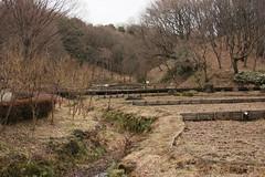 四季の森公園のしょうぶ池(Iris pool at Shikinomori park, Japan)