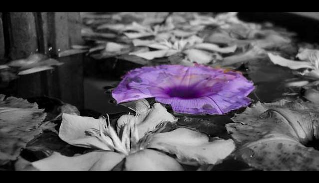 lonley violet