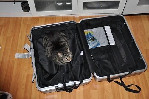 Katze_im_Koffer