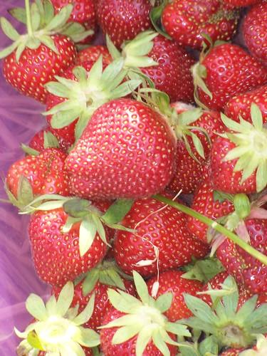 Strawberry Picking 6/3/10