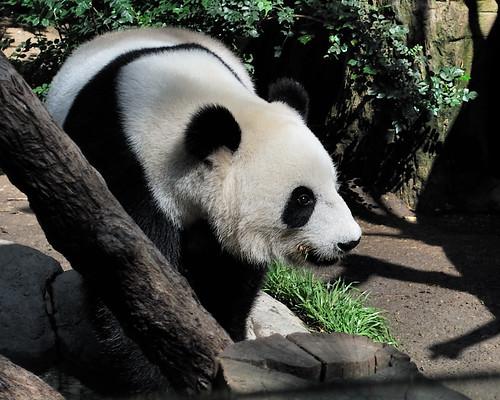 Su Lin at the San Diego Zoo