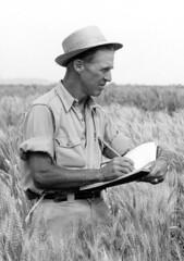 Norman Borlaug, 1964