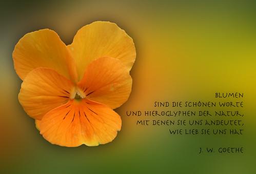 Blumen sind schöne Worte ... by Harald52