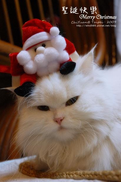 聖誕貓01.jpg