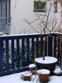 Winter Garden [Day 11/365]