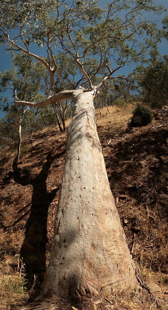 Old Tree Fallen