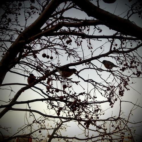 MMX 049 Birds & Berries