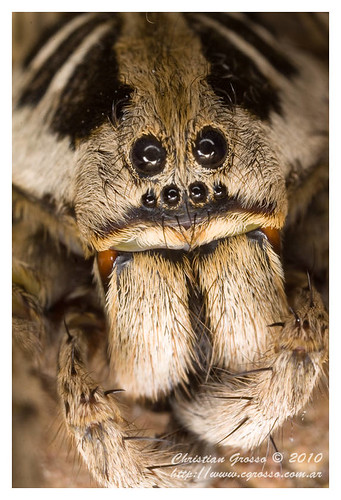 "Araña • <a style=""font-size:0.8em;"" href=""http://www.flickr.com/photos/20681585@N05/4518324458/"" target=""_blank"">View on Flickr</a>"