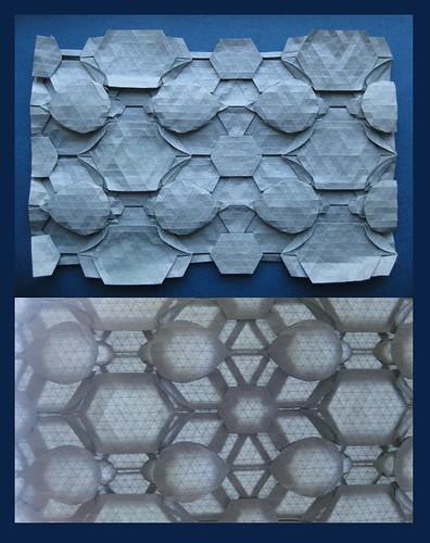Tessellated Seaturtles (Sea Turtle Nest)