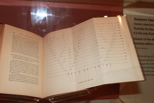 Smithsonian - Evolution of Evolution - Darwin's Tree of Life from 1st Edition