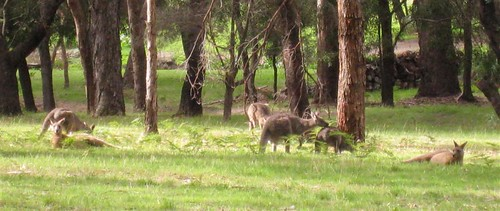 Grampians_0056_crop (Large)
