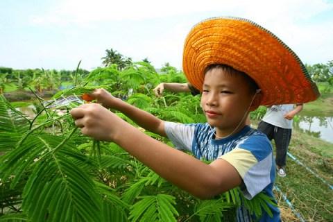 แนวทางการพัฒนา เกษตรอินทรีย์ ของไทย