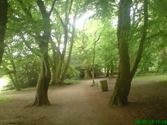 Gloomy Weather Again: Highgate Wood May 2010