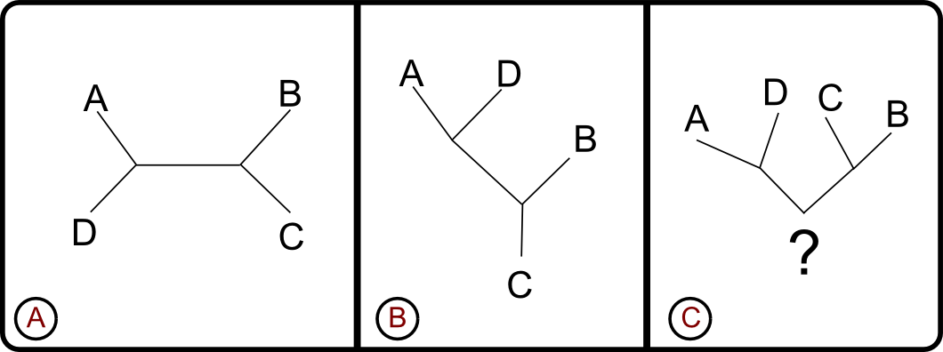 Figure 1: rooted and unrooted trees
