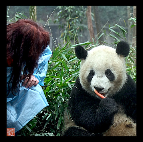 2010 BIFENGXIA PANDA CENTER  ,YA AN CHINA 21