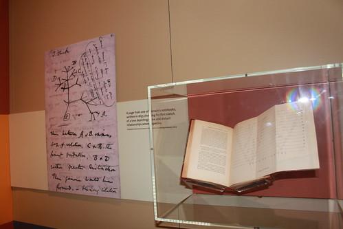 Smithsonian - Hall of Human Origins - Two 'Tree of Life's