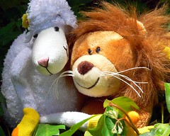 Lamb and Lion