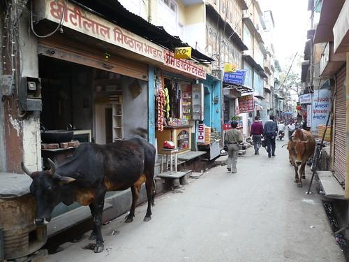 Strassenszene Jaipur