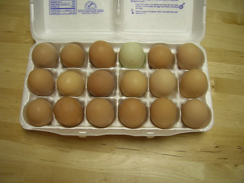 18 free-range, pasture-raised, heritage-breed eggs