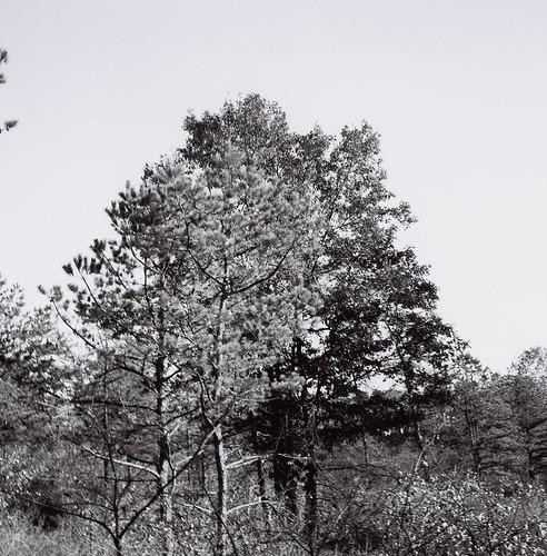 Albany Pine Bush, November 7, in efke