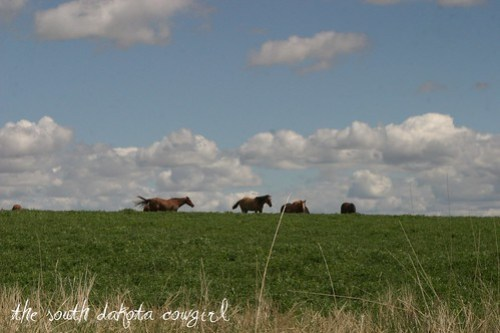 Alfalfa and Sky