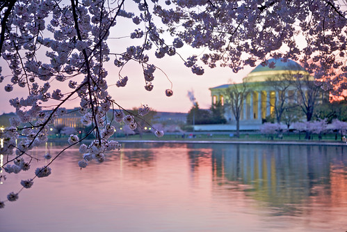 2010 DC cherry blossoms at sunrise