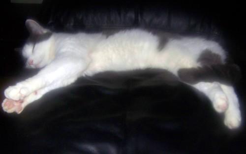 Sleeping Aremid 2010.04.18