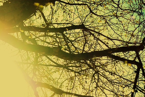 Sun in Branches
