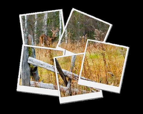 Deer - Polaroid Brush