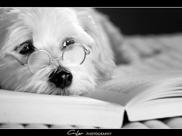 Its A Dog's Life  {3-52}