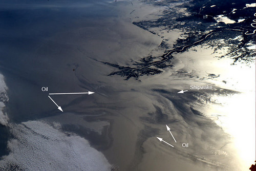 Oil Spill, Gulf of Mexico