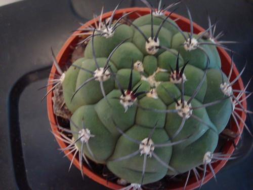My new cactus.