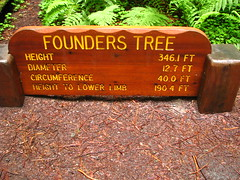 67 - Avenue of the Giants - Founder's Grove - 20100526