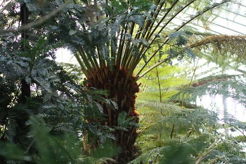 20090919 Edinburgh 20 Royal Botanic Garden 246
