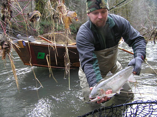 Alsea River Winter Steelhead