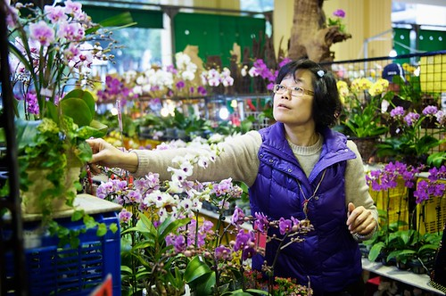 A woman shops for orchids at the Taipei Flower Market