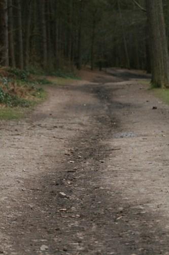 Woodland trail - Lickey Hills