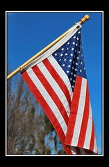 Fly the flag on Veteran's Day